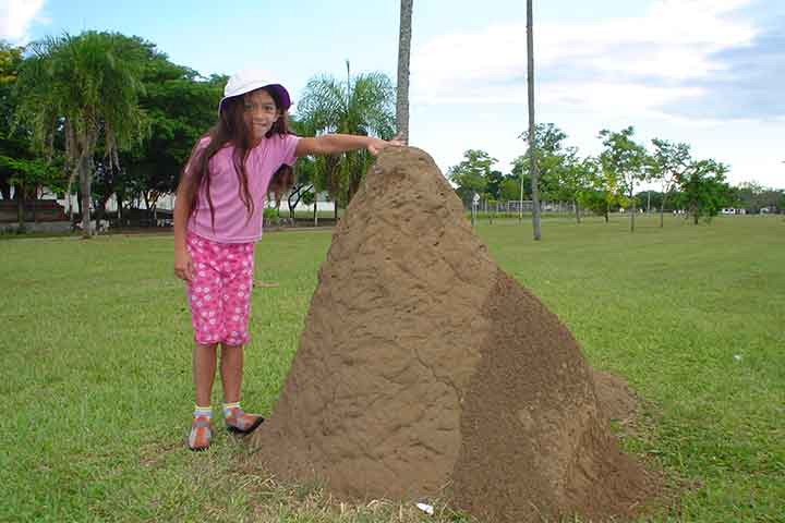 Unfold The Mysteries Of The Ant Hill