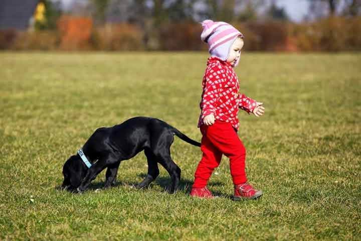 Precautions To Take Care Before Getting A Pet