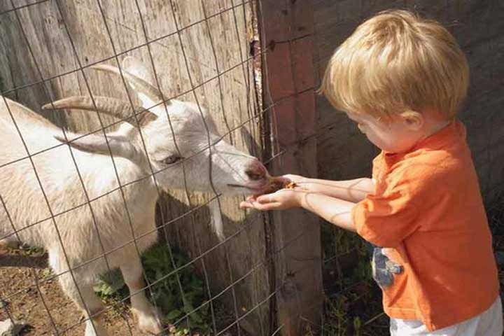 Ensure That Your Kid Is Not Cruel To The Pet