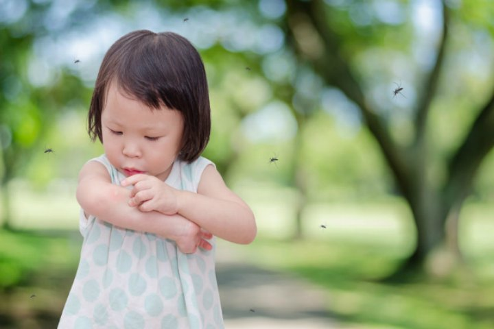 How To Prevent Your Child From Mosquito Bites